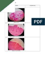 histologi GIT