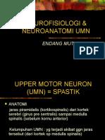 NEUROFISIOLOGI & NEUROANATOMI UMN