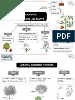 ud7debemoscuidarlasplantas-150208072635-conversion-gate02.pdf