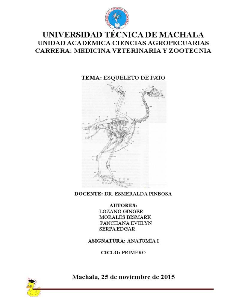 OSTEOLOGIA. Pato