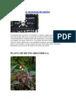 Plantas Venenosas de Mexico