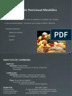 2++Nutricional-Metabólico.pdf