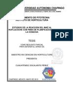 ESTUDIOS DE LA REACCION DEL MAIZ AL HUITLACOCHE CON FINES DE PLANIFICACION DE LA COSECHA