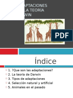 Las adaptaciones según la teoría.pptx