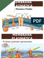 Citologia – Membrana Plasmática