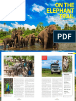 On the elephant trail