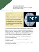 El Cerebro Para Principiantes