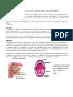 Digestion Cuestionario