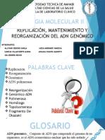 Exposicion Grupo #2 - Replicacion, Mantenimiento y Reorganizacion Del ADN Genomico / Primer Parcial
