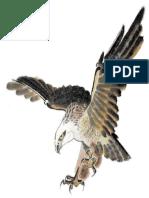 Burung Helang Dan Unta