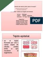 diapositivadehistologiatejidoepitelial1-121206215142-phpapp01