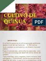 Manejo Del Cultivo de Quinua