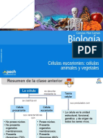 Clase 6 C+®lulas eucariontes animales y vegetales.ppt