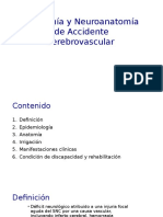 ACV Anatomía y Fisiopatología