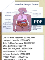 Pencernaan Dan Absorpsi Protein Kelompok 2
