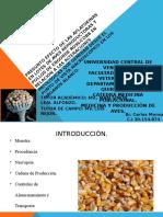 EFECTO DE LAS AFLATOXINAS EN LOTES DE AVES.ppt