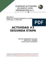 Actividad 3 Anatomia