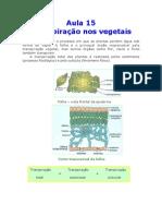 Biologia - Aula 15 - Transpiração nos vegetais