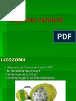 252173921-Digestia-Celulara-VII.ppt