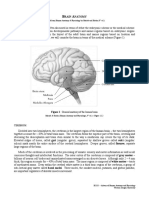 Intro Neuroanatomy