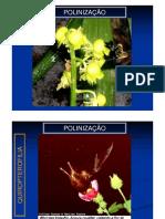 Biologia Botânica - Polinização e Fertilização
