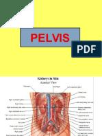 Pelvis_ Organa Urogenitalia Masculina