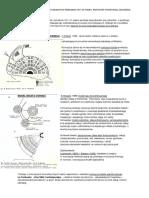 Teoretyczne Modele Miast Idealnych