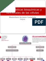 Características Bioquímicas y Funcionales de Las Células