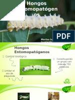 Historia de los Hongos Entomopatogenos