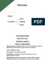 1. Datos Anatomicos Pelvicos. Obstetricia