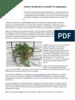 Conseils pour la culture de plantes la manière organique