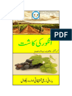Production Technology of Grapes in Punjab