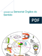 Sistema Sensorial Novo (1)