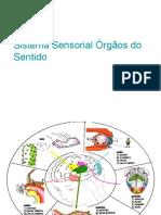 Sistema Sensorial Novo