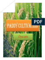 Paddy Cultivation GVHSS MANANTHAVADY