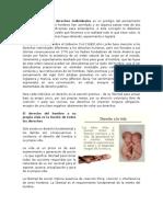 derechos individuales y colectivos.docx
