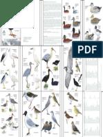 Aves de Conococha - ANTAMINA