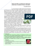 UFRJ pesquisa planta que inibe a produção de anticorpos