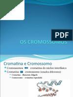 OS CROMOSSOMOS