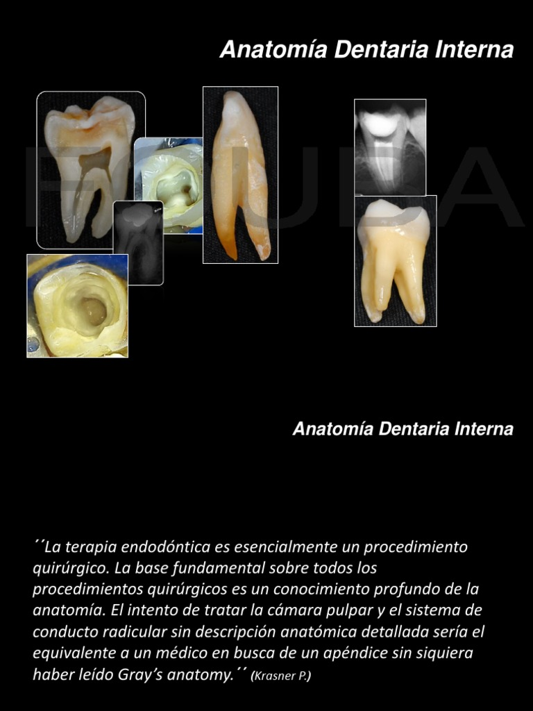 Anatomia Dentaria Interna