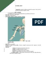 Axila-anatomie