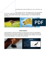 Animales Proyecto