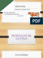 Musculos de La Cola