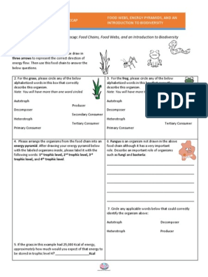 Ecological Relationships Worksheet Pdf Answer Key Amoeba ...