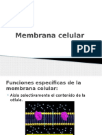 Membrana Celular Biologia