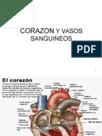 Sistema Circulatorio 2015