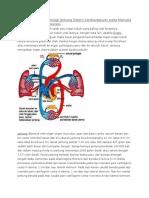 Fungsi Dan Istilah Fisiologi Jantung Sistem Kardiovaskuler Pada Manusia