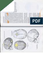 Anatómia I. - Könyv -140