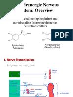 Adrenergic Nervous System