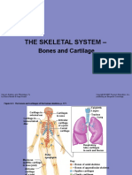 skeletalsystem-110101230647-phpapp02